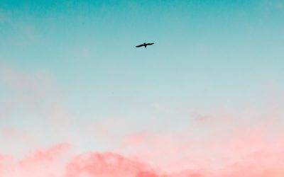 Tornare a volare (Privé)