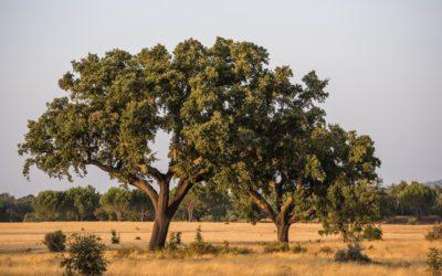 Dalla quercia alla bottiglia: la sostenibilità che premia