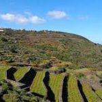 Zibibbo Pantelleria