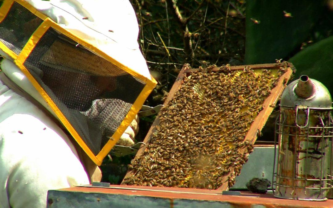 Seduzioni pantesche: Denny Almanza, il guardiano delle api