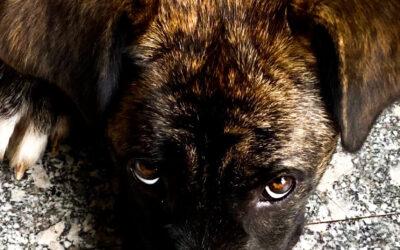 Cani, topi e umane emozioni